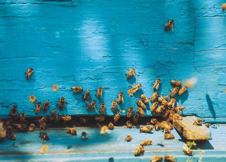 Praktikum, Jobs und Stellen bei Beekeeper auf talendo